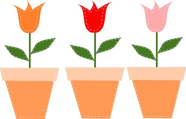 tulipány v květináčích