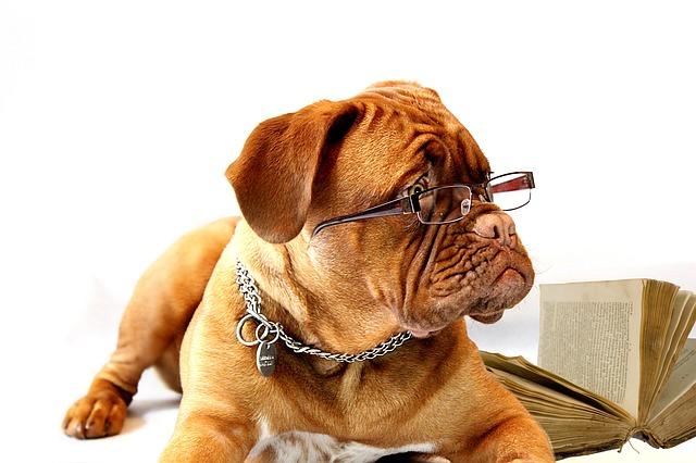 doga s brýlemi